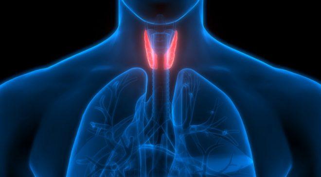 Tiroid nedir? Tiroid Belirtileri, Tiroid Hastalıkları Tedavisi