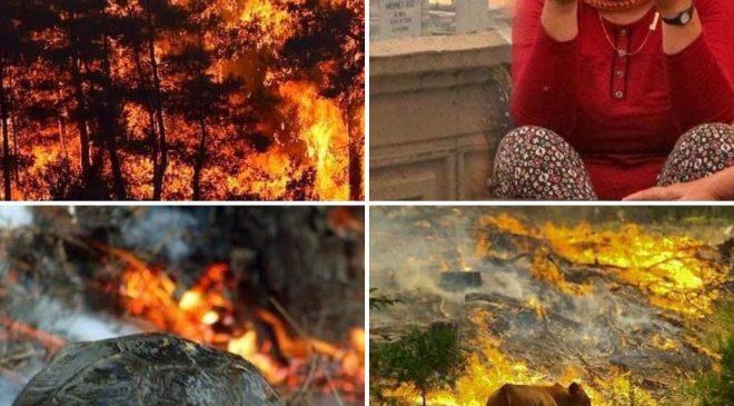 Yangın Kütahya, Alanya, Didim ve Bodrum'a da sıçradı